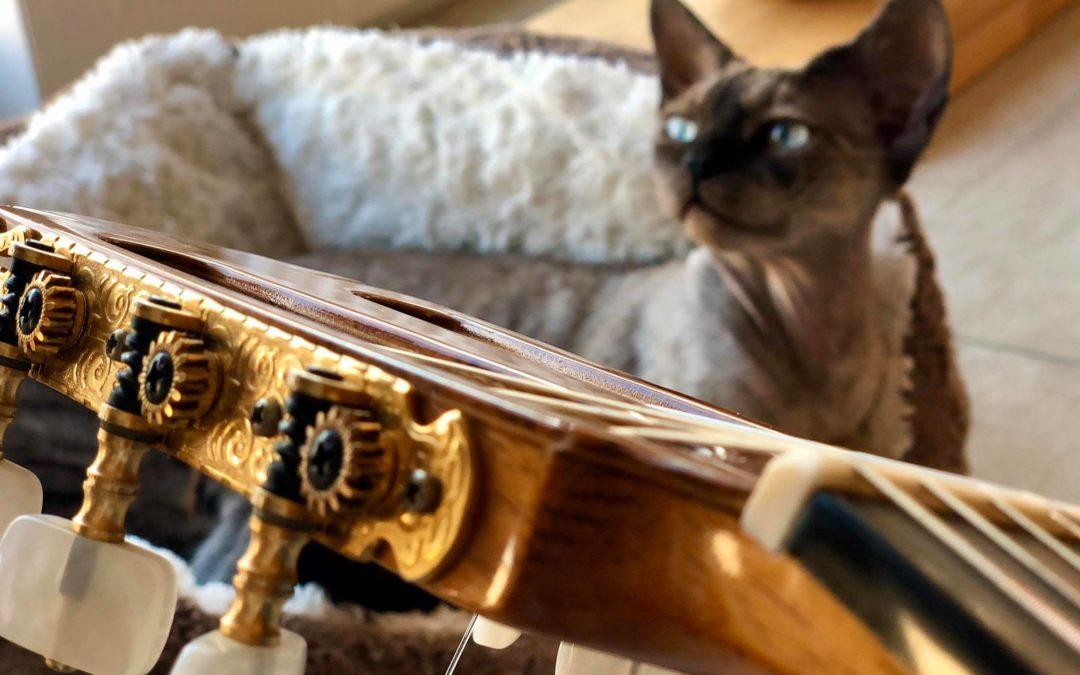 Un cours de guitare ch'harmonieux