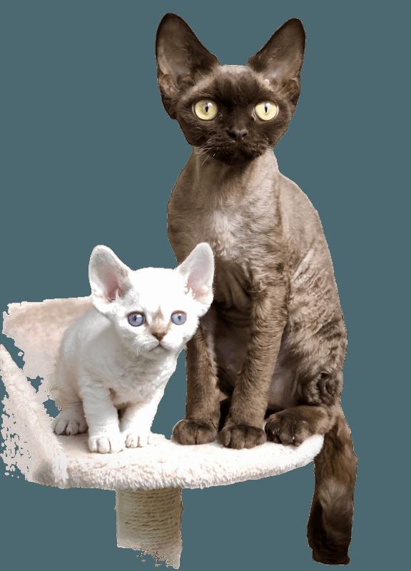 Heidi et Merlin, les deux mini puces de 48 et 51 grammes